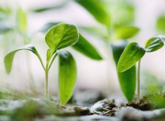 Green seedlings sprouting from soil